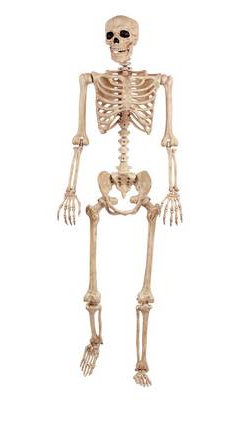 Large hanging skeleton