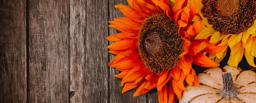 sunflower and pumpkin on wooden background